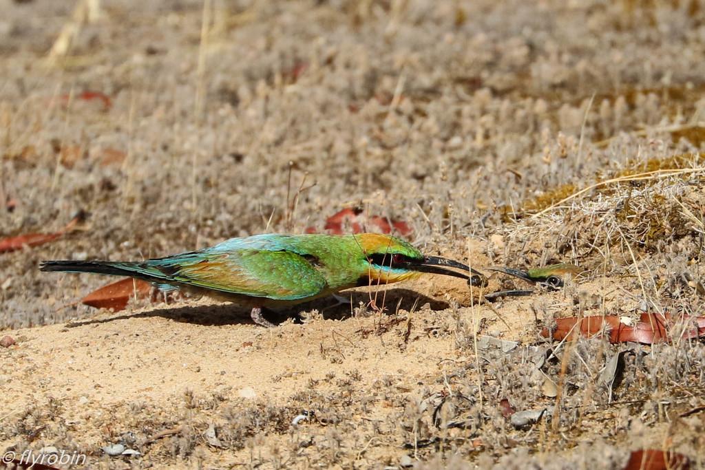 Feeding time by flyrobin