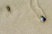 5th Feb 2021 - On the beach