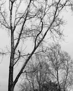 4th Feb 2021 - feeling very cold