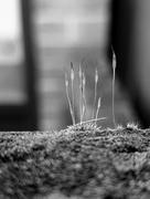 5th Feb 2021 - Moss Landscape