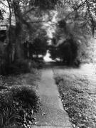 5th Feb 2021 - The Path