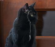 5th Feb 2021 - Housekeeping Cat?