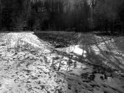 5th Feb 2021 - Walking along the path