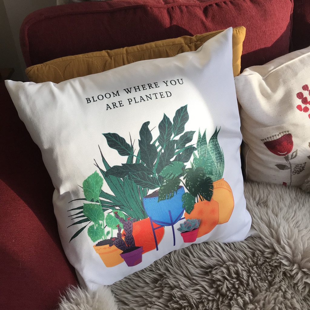 Cushion Conundrum by daffodill