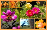 5th Feb 2021 - Colours of Summer..