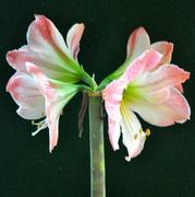 5th Feb 2021 - A quartet of blooms.......