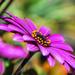 Purple by sherimiya