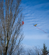 5th Feb 2021 - Good Grief Charlie Brown! Watch out for that kite eating tree