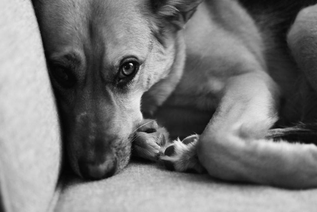 Snuggle up, Stay Warm! by karasoo2
