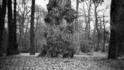 6th Feb 2021 - It's the tree again