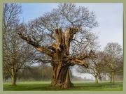 6th Feb 2021 - Old Tree