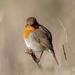 Round Robin by uerks