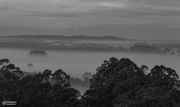 6th Feb 2021 - a misty morning