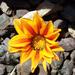 Orange by jaybutterfield