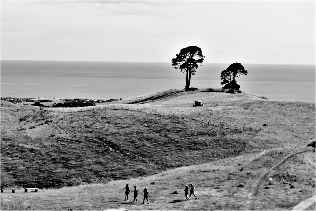 Papamoa Hills View out to the Pacific Ocean by sandradavies