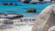 7th Feb 2021 - Penguins at Boulders