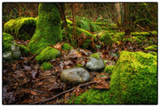6th Feb 2021 - Forest Floor