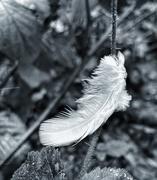 7th Feb 2021 - Angel feather?
