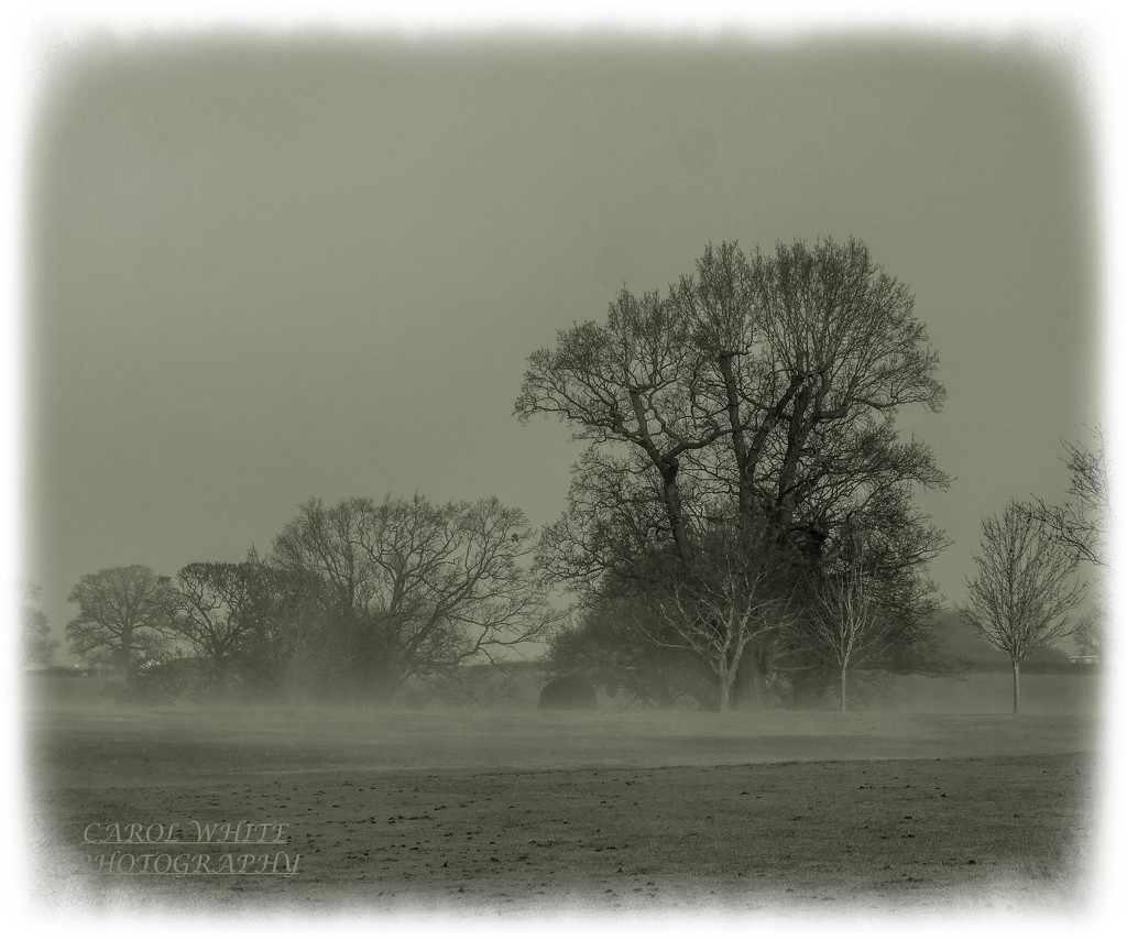 Misty Morning by carolmw