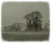 7th Feb 2021 - Misty Morning
