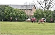 7th Feb 2021 - The rescue horses
