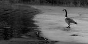 7th Feb 2021 - To Skate or To Swim