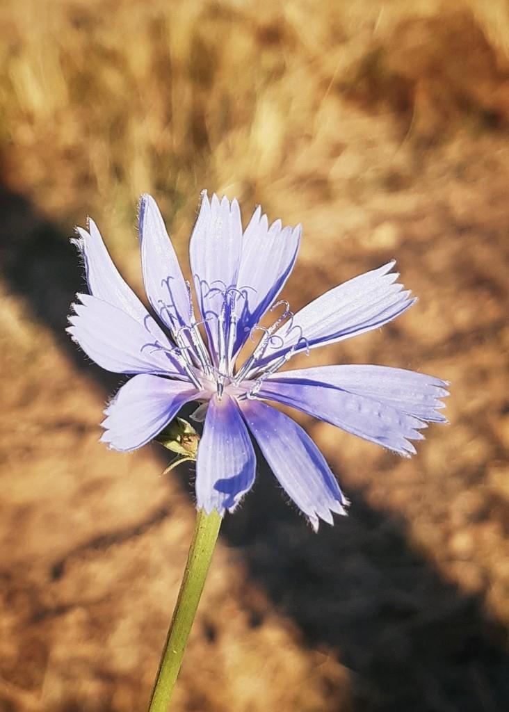 Pretty blue flower  by salza