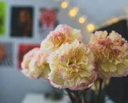 6th Feb 2021 - When Beauty Blooms