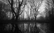 7th Feb 2021 - Misty wood