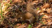 7th Feb 2021 - Squirrel Got a Nut!