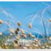 Beach Bunny Tails... by julzmaioro