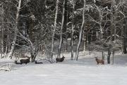 8th Feb 2021 - The Red Deer