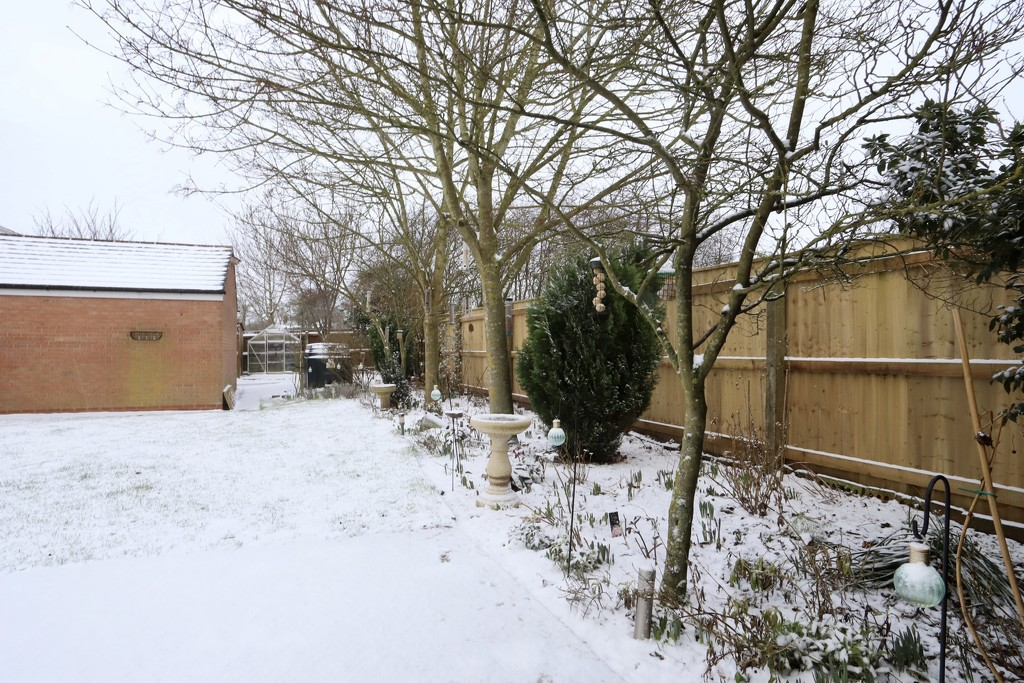 My Garden February 2021 by phil_sandford