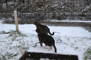 8th Feb 2021 - Dougal and Florence in the snow
