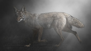 6th Feb 2021 - The Hunter