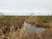 7th Feb 2021 - Wetlands