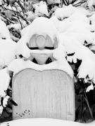 8th Feb 2021 - Snow princess