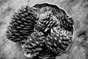 8th Feb 2021 - FoR2021 Pine Cones