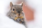 9th Feb 2021 - I wish I had chipmunk cheeks!