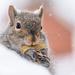 I wish I had chipmunk cheeks! by jyokota