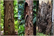 9th Feb 2021 -  Textures & Tree Trunks ~
