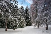 8th Feb 2021 - Winter in wonderland