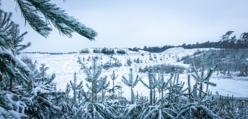 Snowy pine forest by matsvanesphotography