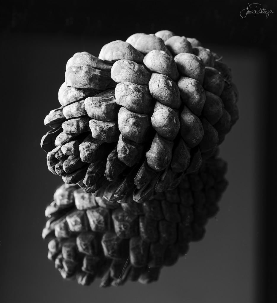 Pine Cone  by jgpittenger