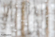 8th Feb 2021 - Snow Bokeh