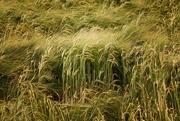 9th Feb 2021 - Summer crops