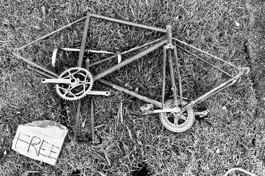 Free.Trash by brigette