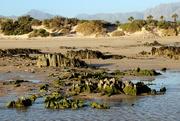 7th Feb 2021 - 2021 02 07 Dog Beach