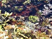 4th Feb 2021 - Underwater garden