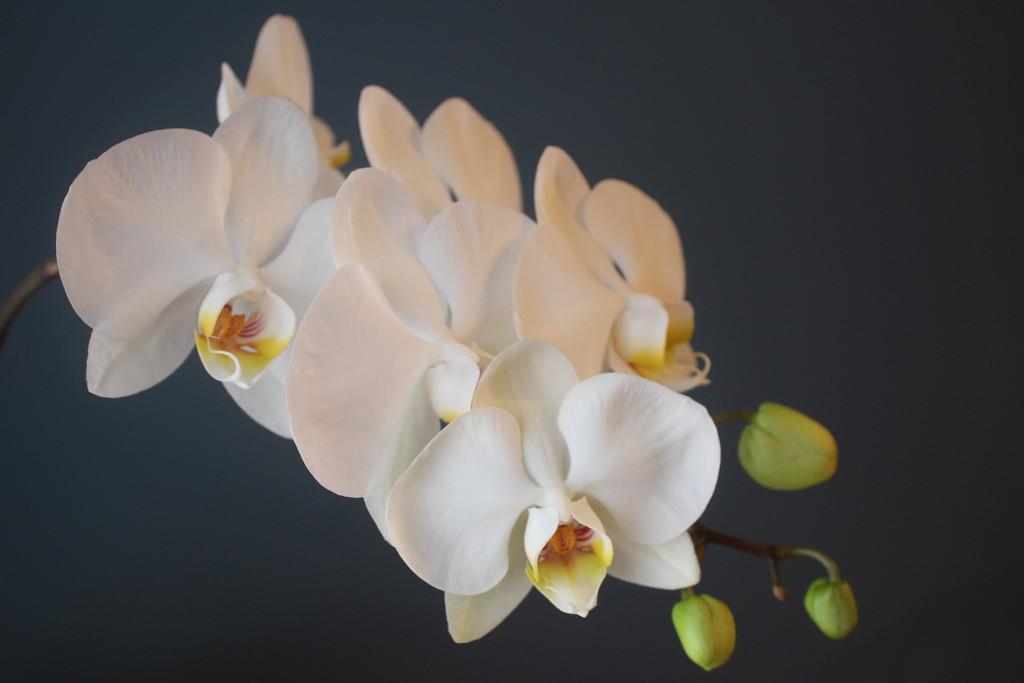 Blooms 5 & 6 by jb030958